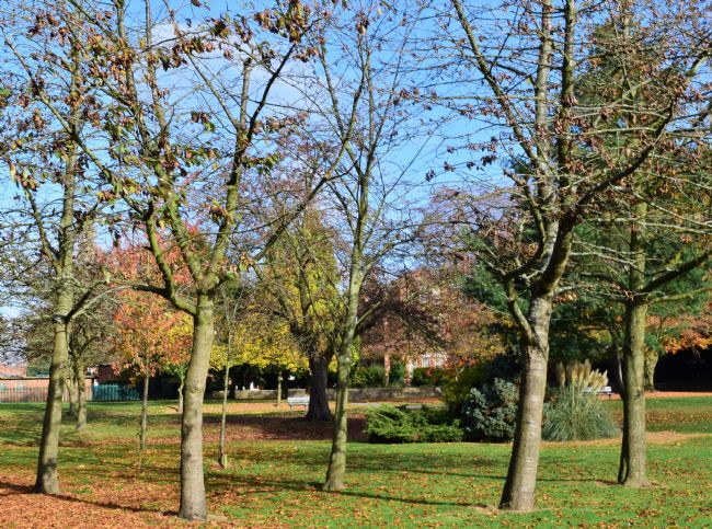 Warren Byrne | Autumn in Queens Park, Birmingham.