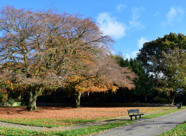 Warren Byrne | Autumn in Queens Park