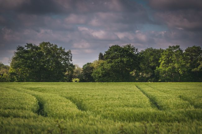 Warren Byrne | A Field in Fazeley