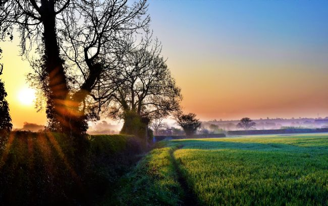 Warren Byrne | Dawn Over Fazeley Fields