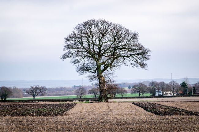 Warren Byrne | Tree on Wiggins Hill