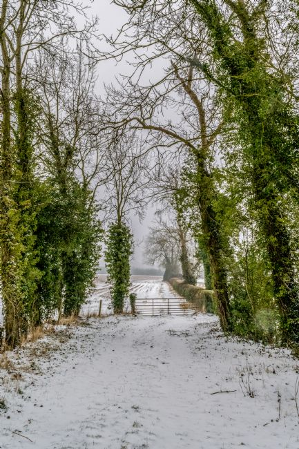 Warren Byrne | Fazeley Fields  in the Snow
