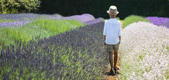 Peter Jackson | The Boy in the Lavender Field